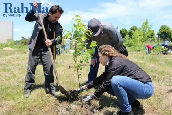 ولوو برای ادای احترام به کمپین درختکاری بزرگراه هیروز پیوست